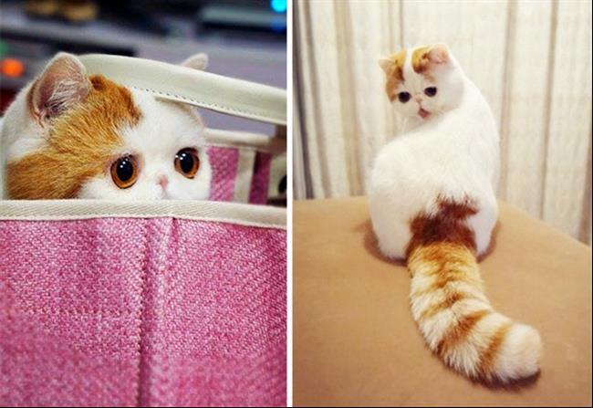 Os-Gatos-Mais-Famosos-da-Internet-Blog-Animal-14