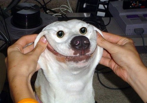 1463-cachorro-feliz