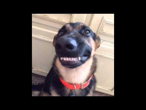 erike-sorria-cachorro-sorrindo-perolas-da-internet