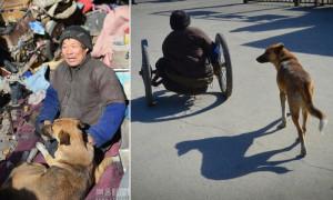 cadeira-rodas-cachorro-interna