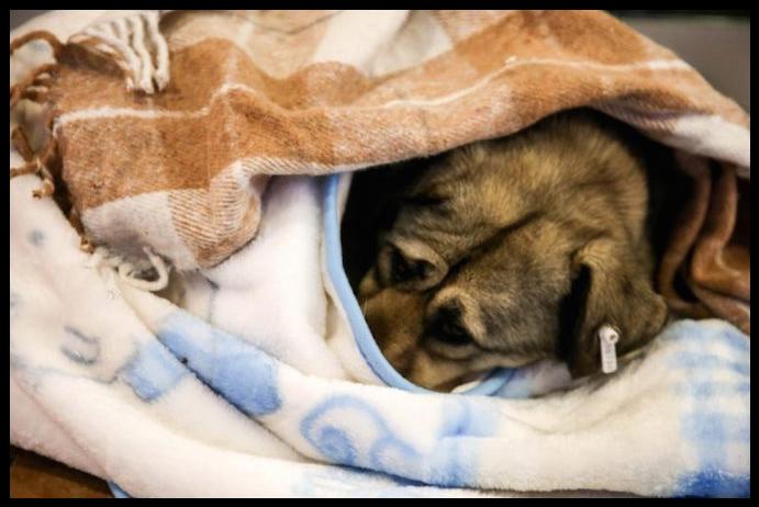 cães-tempestade-neve