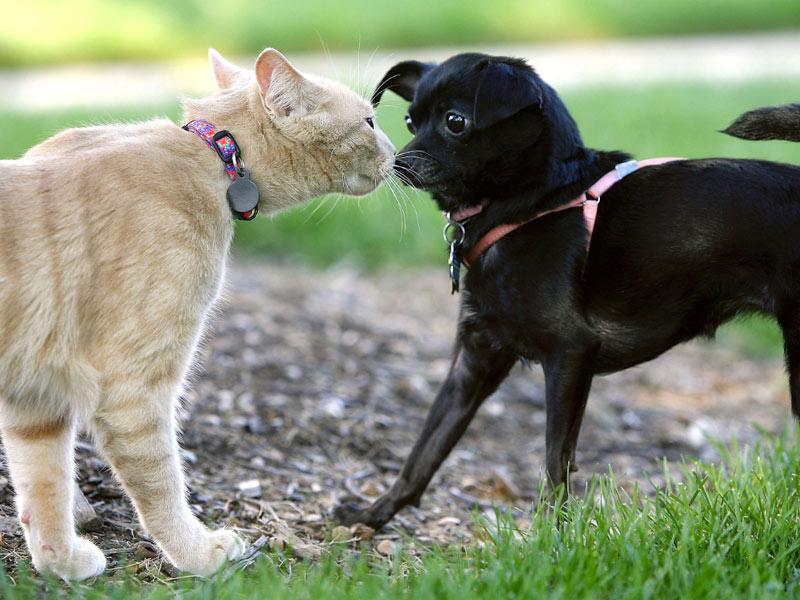 identificação cães e gatos