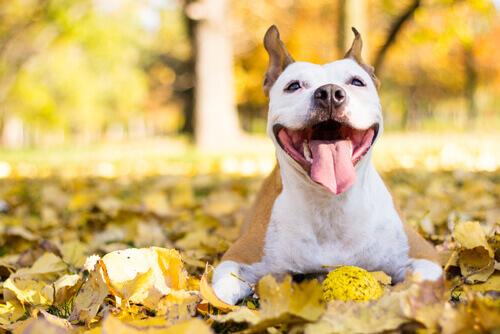 Dia Internacional do Cães