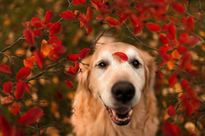 Dia internacional dos Cães 5