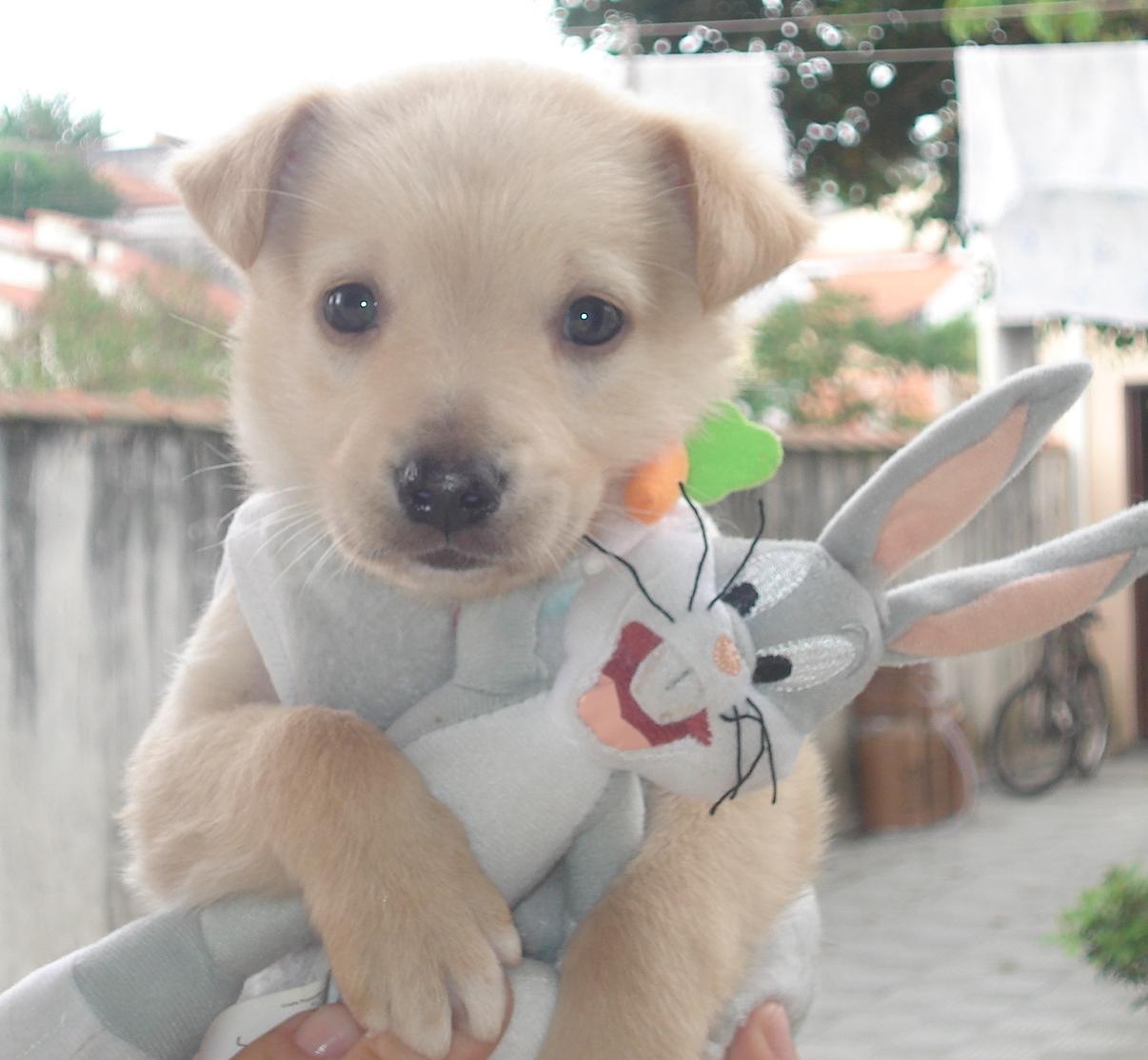 Dia internacional dos Cães 7