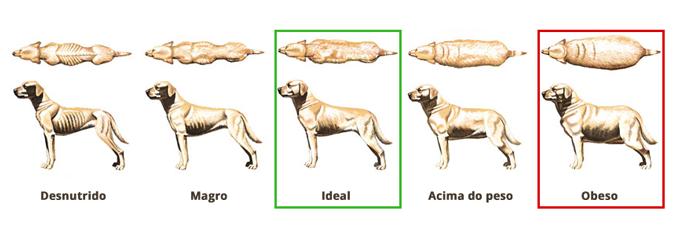 cachorro obeso 2