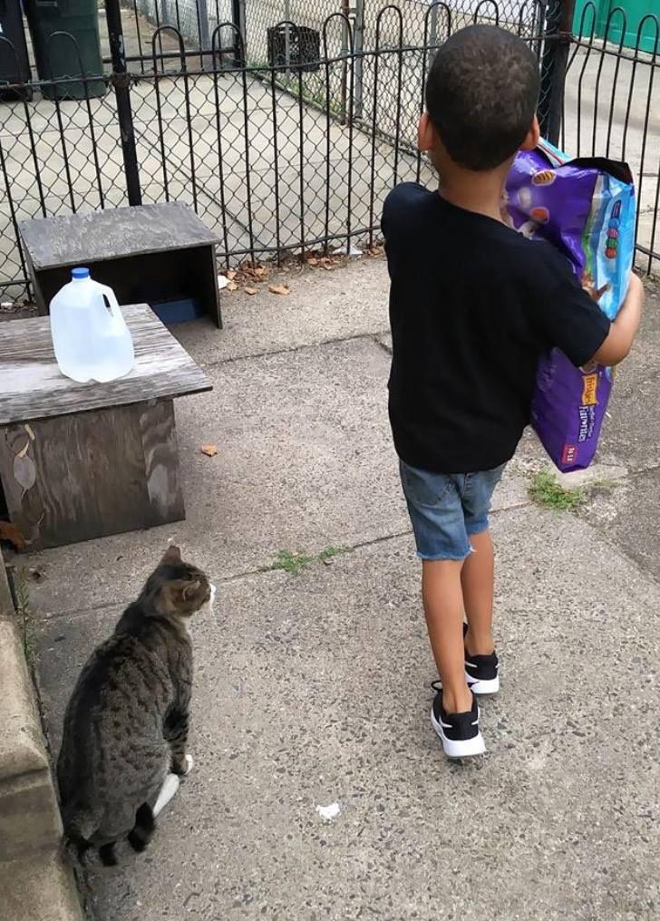 gatos de rua 3