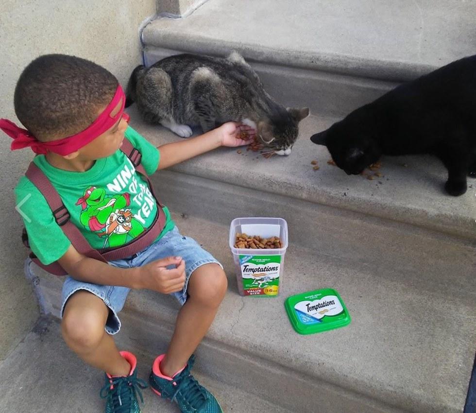 gatos de rua 5