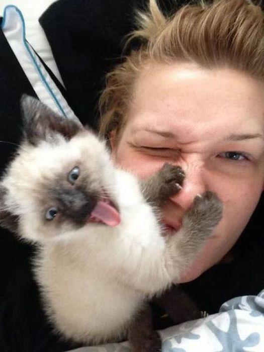 gatos odeiam 10