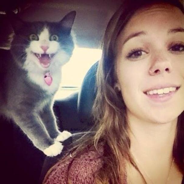 gatos odeiam 2