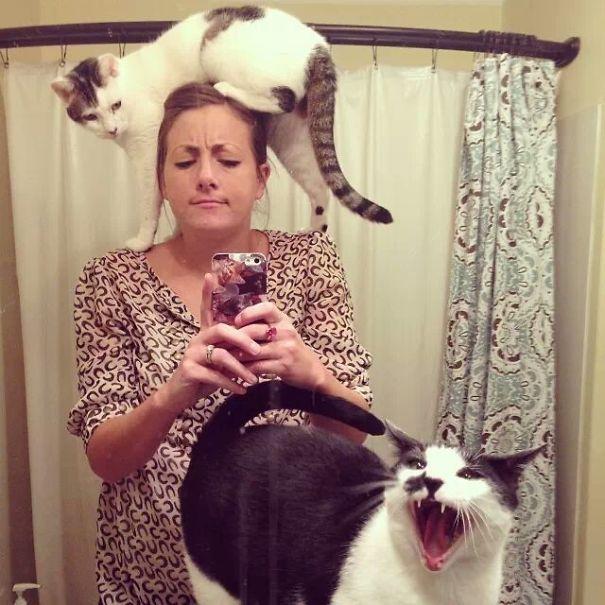 gatos odeiam 5