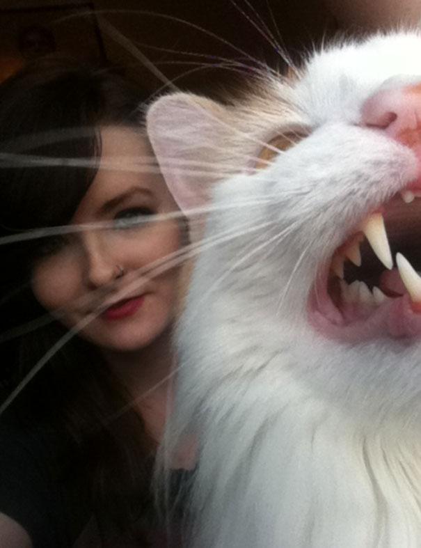 gatos odeiam 9