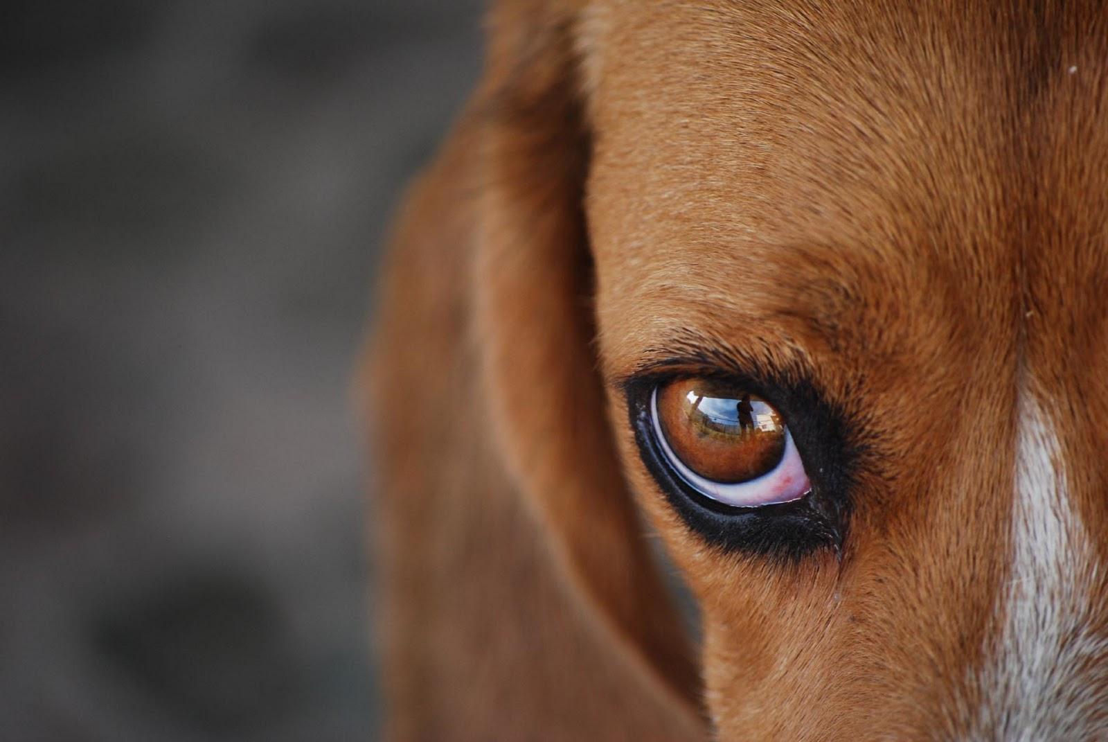 oftalmológicas 3