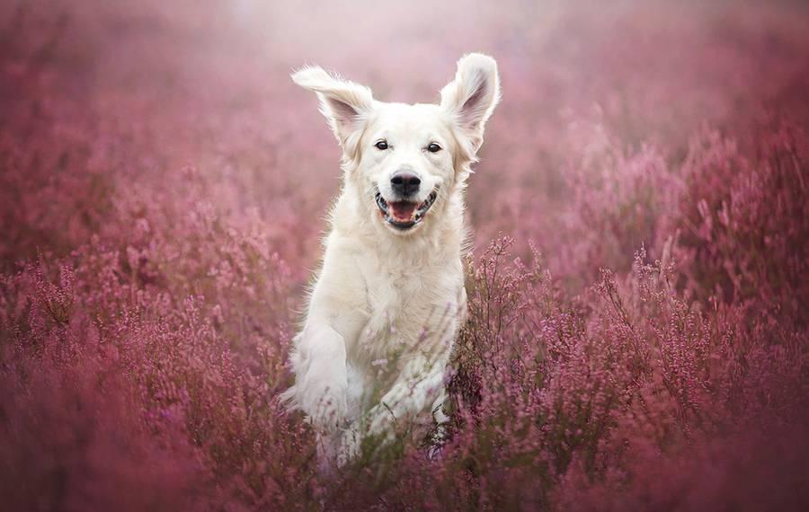 Dia internacional dos Cães