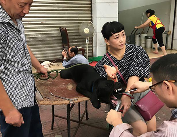 Falso veterinário