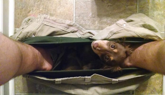 Conheça algumas das raças de cães mais apegadas ao dono