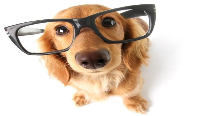 Seu cãozinho precisa de óculos? Será?
