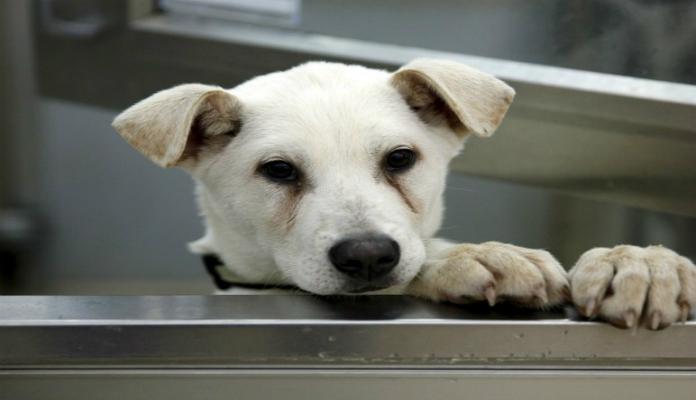 Cães são considerados impuros no Irã