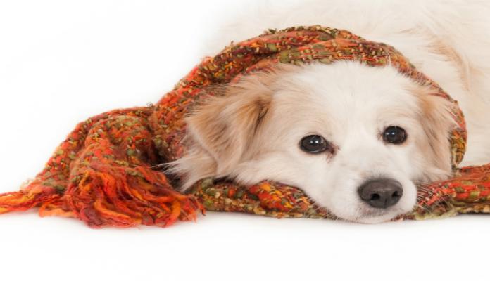Roupa para cães abandonados – Uma lição de amor