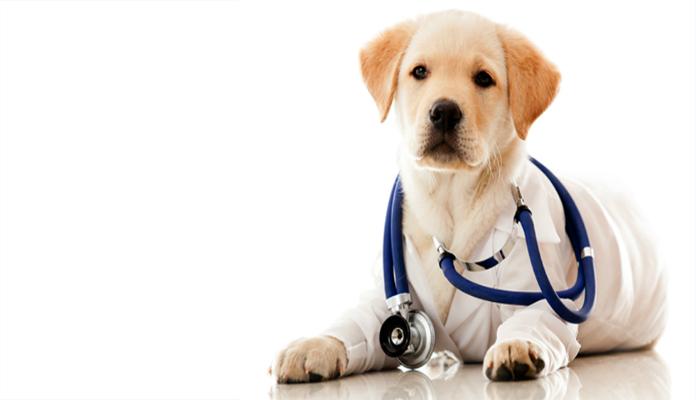 Carinho que vem dos cães – Terapia Hospitalar