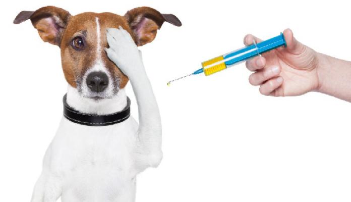 Vacinas para cães e gatos: Fica ligado!