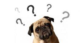 Castrar ou não castrar? | Portal dos Cães e Gatos