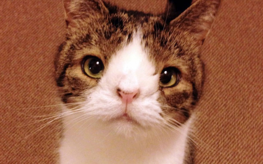 Monty-el-Gato-con-una-Nariz-Diferente-880x550