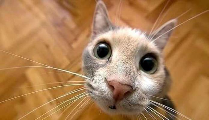 Da série nomes de animais… vem aí: Dicas para gatinhos!