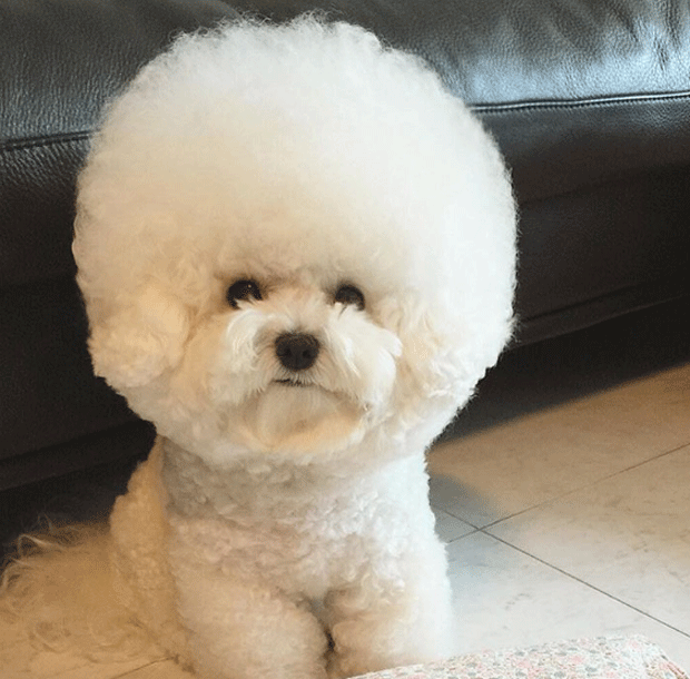 cãozinho Tori