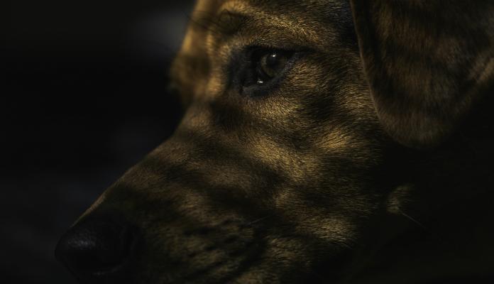Cães abandonados viram predadores na Floresta da Tijuca
