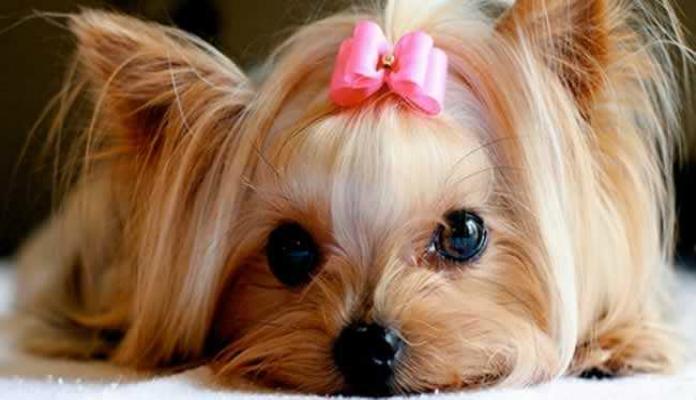 Nome para Cachorro Fêmea Pequena. Escolha um destes!