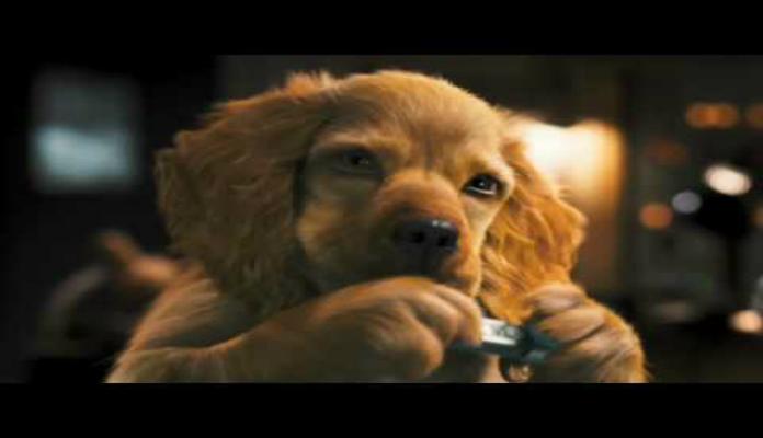 Filme Como Cães e Gatos