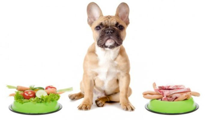 Alimentação saudável para cães – Dicas