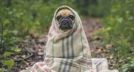Cuidados especiais com os pets no inverno
