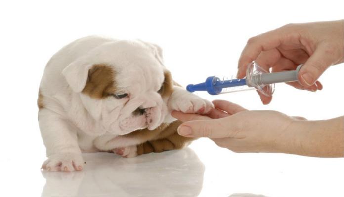 Vacina contra raiva: O ideal é prevenir