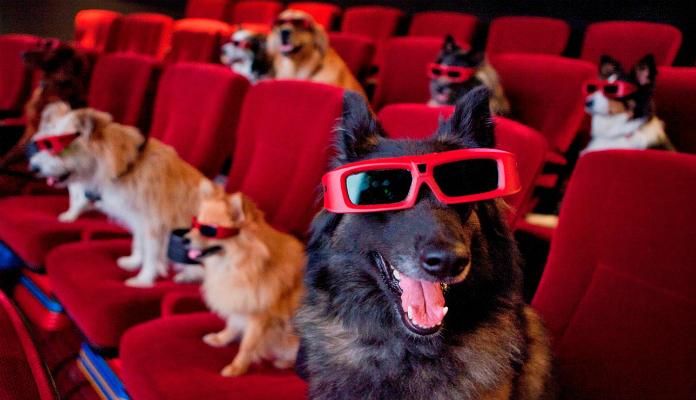 5 melhores filmes de cachorros:
