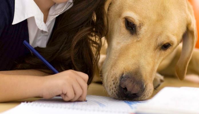 Animais de estimação e a importância na vida dos autistas