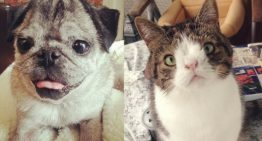 Animais com síndrome de down – Entenda como funciona!