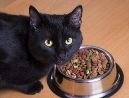 Ração para gatos castrados – É mesmo necessário?