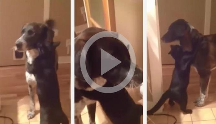 Gato reencontra amigo cão depois de 10 dias longe e tem reação comovente.