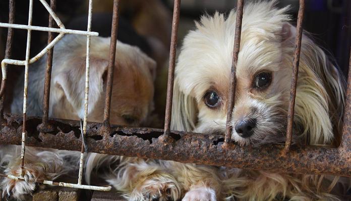 É legal invadir domicílio em casos de maus-tratos a animais