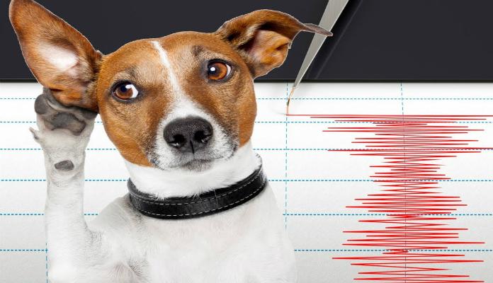 Animais conseguem prever terremotos – Você sabia?