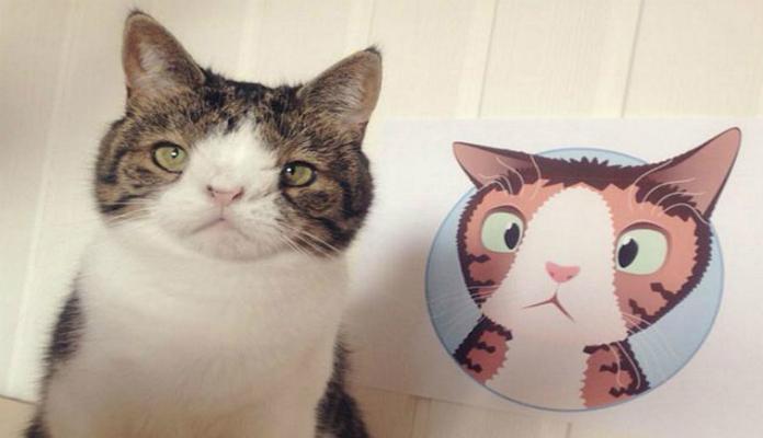 """Saiba mais sobre Monty, o gatinho com """"Síndrome de Down"""""""