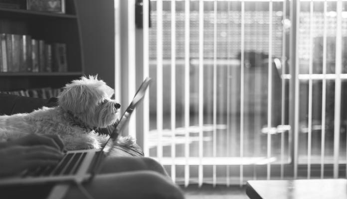 Melhores Raças de Cachorros Pequenos para Apartamento