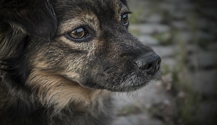 Holanda é o primeiro país do mundo sem cachorros abandonados nas ruas, e sem sacrifícios de inocentes