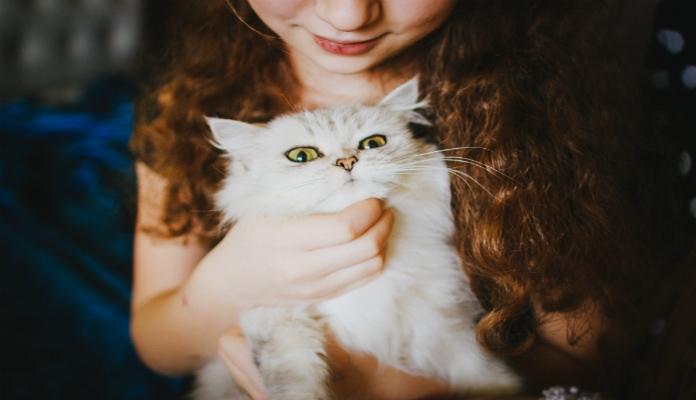 Como Acabar com Pulgas em Gatos – Passo a Passo
