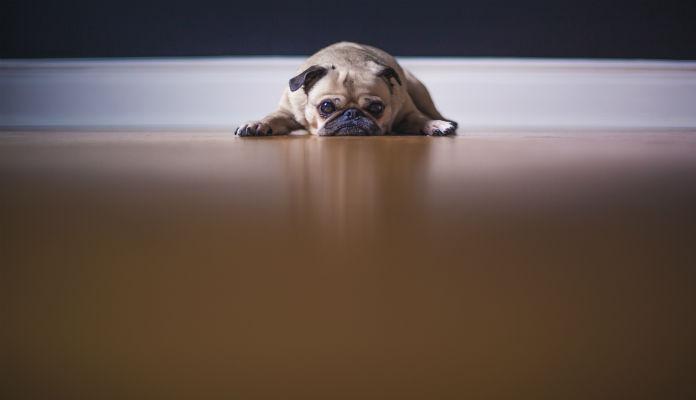 Câncer de mama canino
