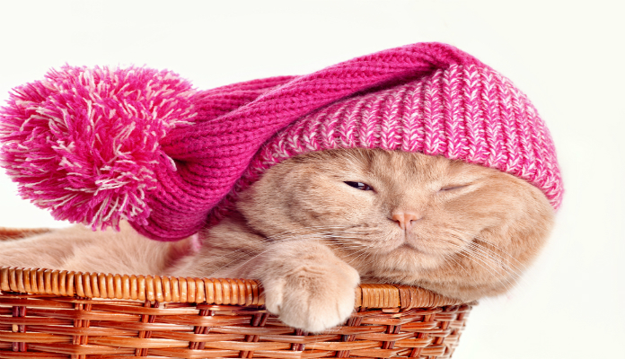 Dicas de cuidados com os gatos no inverno