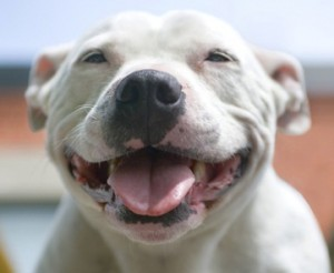 1-cão-sorrindo-300x246