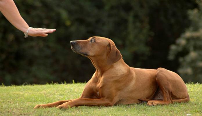 Como adestrar seu cão – Preparando o terreno
